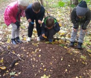 IIa-lekcja w terenie, poznajemy piętra lasu.