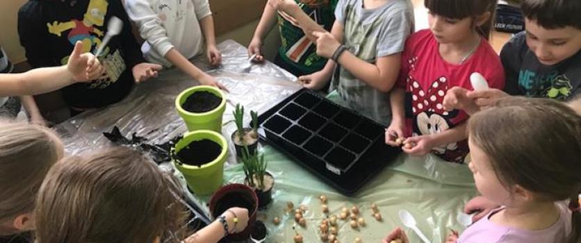 Sadzimy cebulki – klasa 1C