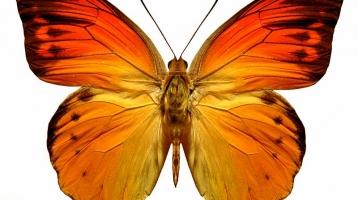 Motyl Wolontariat
